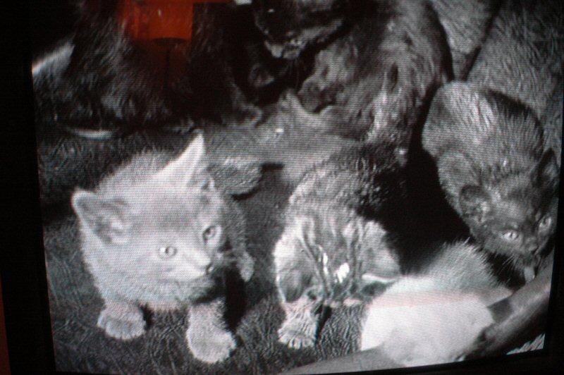 Kittens of 1933.